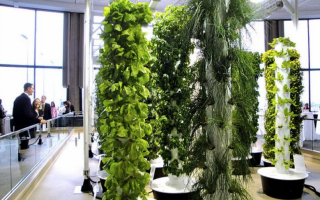 Middle East aeroponics systems in Africa?