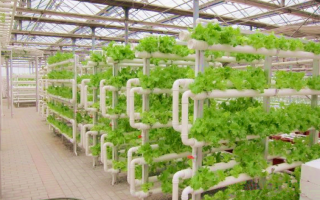 Aeroponic system is the Africa's agriculture future?