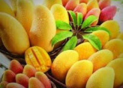 Delicious Pakistani Mangoes Available
