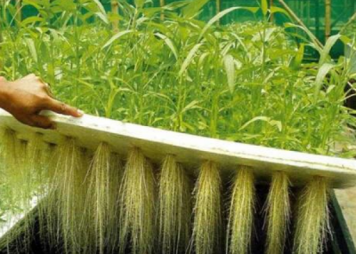 Aeroponics companies in Africa and MENA countries