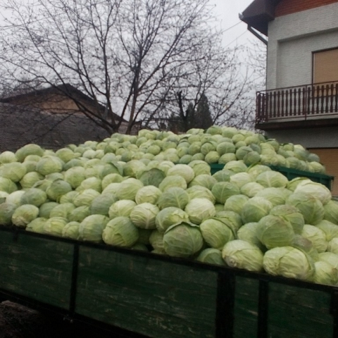 Serbian Fruits and Vegetables