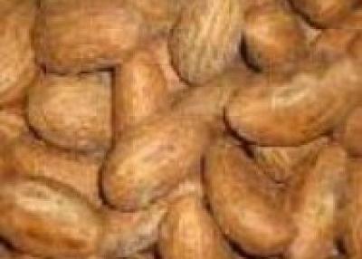 kola nut and bitter kola