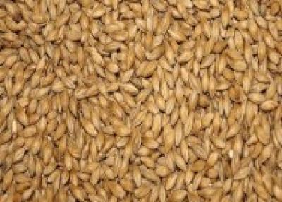 Barley Feed