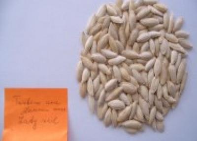 Pumpkin Seeds Type Lady Nail