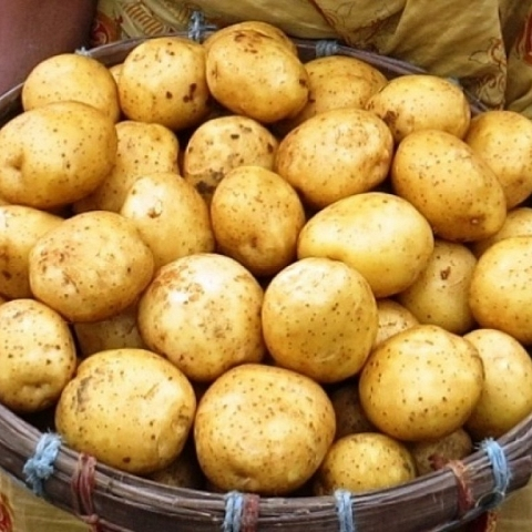 Looking for importer/Exporter for Potato & Maize