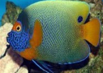 Exporter Marine Fish